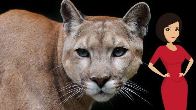 Fenomeno cougar: farsi predare da una donna puma